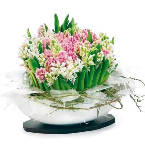 Hyacinths composition